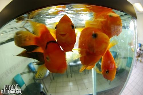 animals,fish,fishtank,pets,smiling