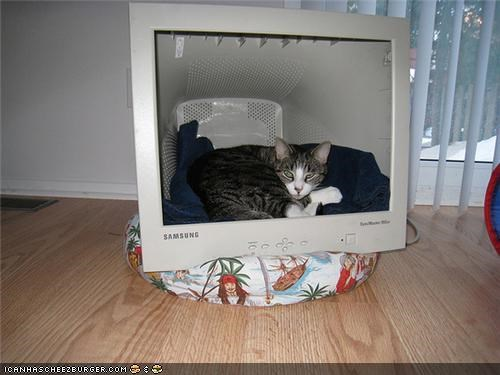 Nine Photos of Animals With Lovely Computer Monitor Homes