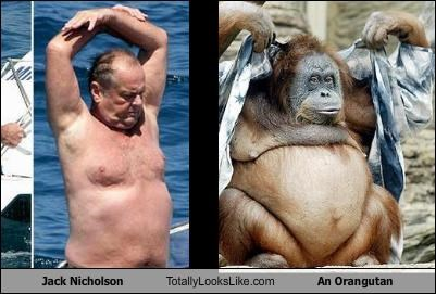 actors,animals,jack nicholson,orangutan