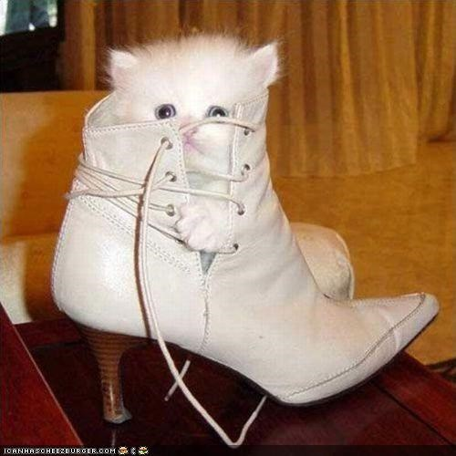 cyoot kitteh of teh day,fashion,Fluffy,shoes,too big,white