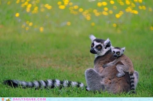 Lemur-Back Ride!