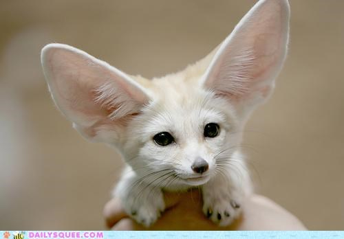 Happy Fennec Says 'Smile!'