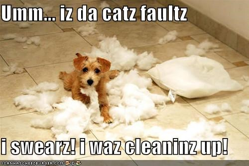 Umm... iz da catz faultz   i swearz! i waz cleaninz up!