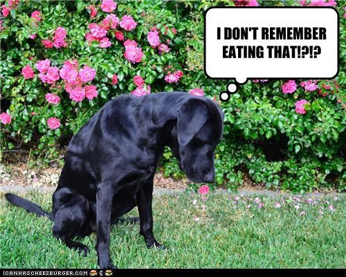 I DON'T REMEMBER EATING THAT!?!?