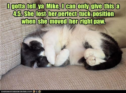 4.5,caption,captioned,cat,curled up,lost,moving,nap,olympics,perfect,position,reason,right paw,score,sleeping,tuck