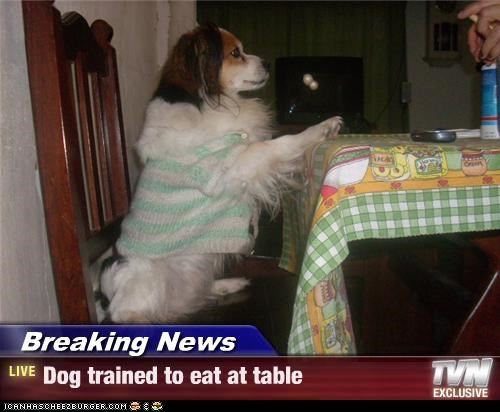 Breaking News - Dog trained to eat at table
