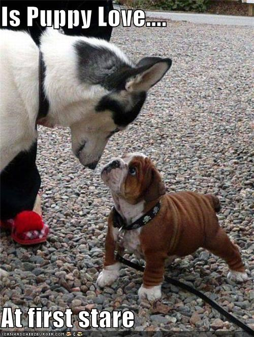 Is Puppy Love....  At first stare