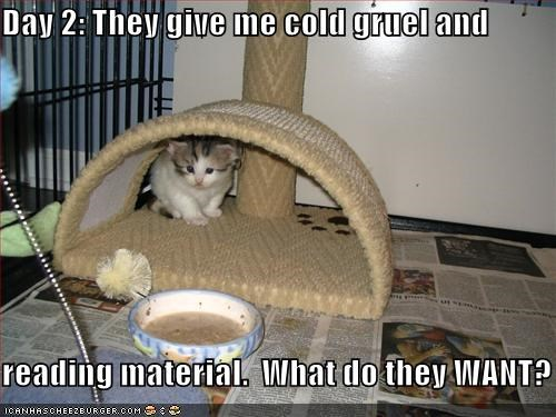 confused,food,gruel,kitten,lolcats,lolkittehs,newspapers