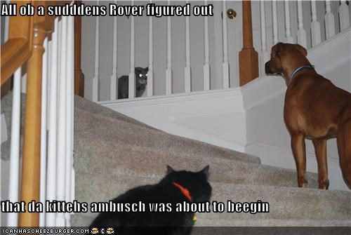 All ob a sudddens Rover figured out  that da kittehs ambusch was about to beegin