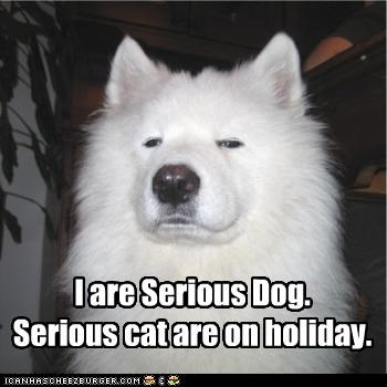 american eskimo dog,filling in,holiday,replacement,serious,serious cat,serious dog