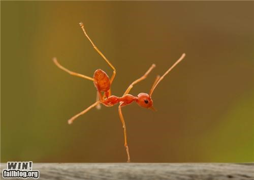 Mother Nature FTW: The Break Dancing Ant