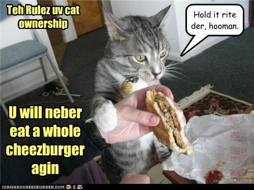 Teh Rulez uv cat ownership