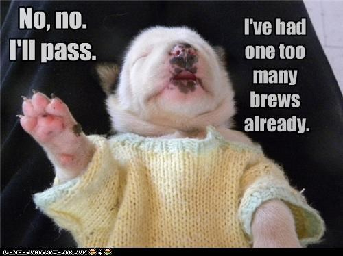alcohol,already,brews,drunk,no,one,pass,puppy,sweater,too many,whatbreed