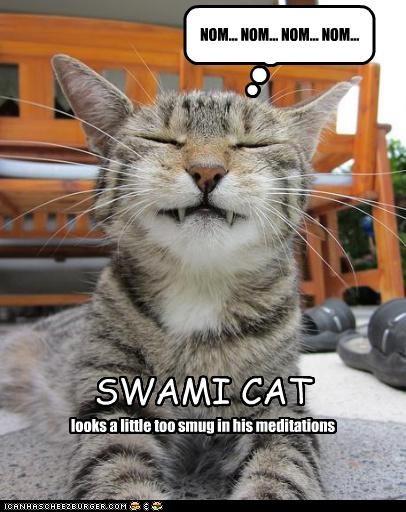 Swami cat