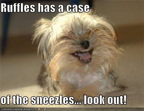 Ruffles has a case  of the sneezles... look out!