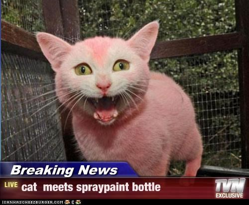Breaking News - cat  meets spraypaint bottle