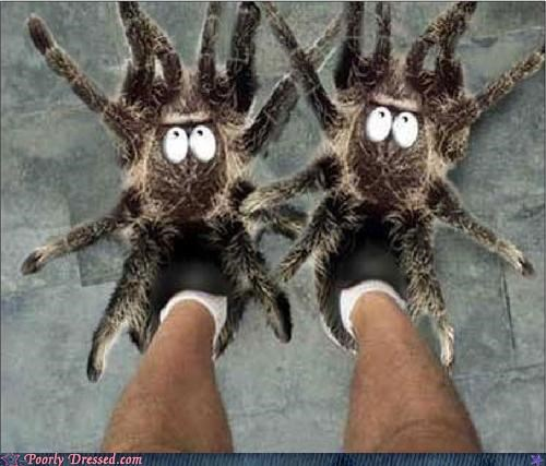 shoes,slippers,spiders