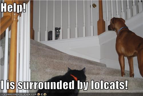 afraid,boxer,cat,Cats,do not want,fear,help,lolcats,scared,stairs,surrounded