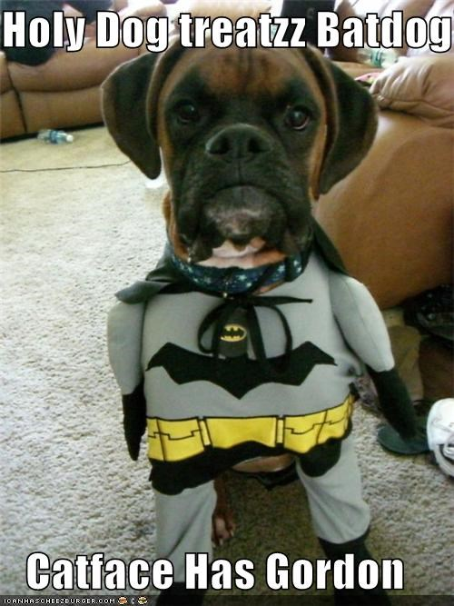Holy Dog treatzz Batdog!!  Catface Has Gordon