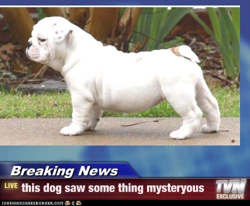 Breaking News - this dog saw some thing mysteryous