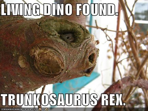 LIVING DINO FOUND.  TRUNKOSAURUS REX.