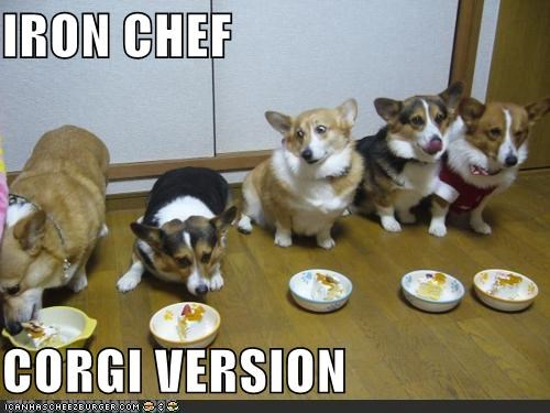 IRON CHEF  CORGI VERSION
