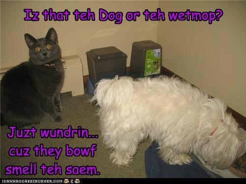 Iz that teh Dog or teh wetmop?
