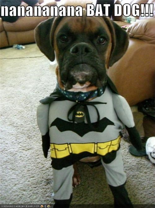 nanananana BAT DOG!!!