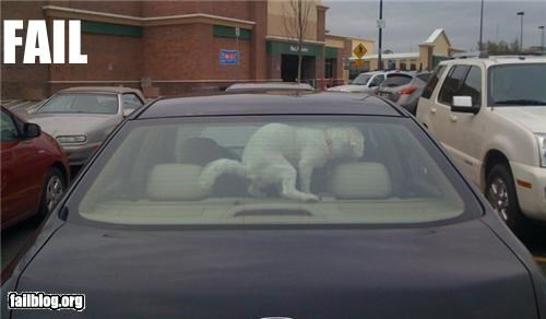 Leaving Your Dog Alone FAIL