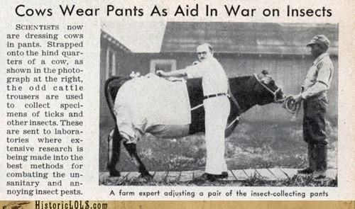 Cow Pants: The Last Line Of Defense In The War On Insects