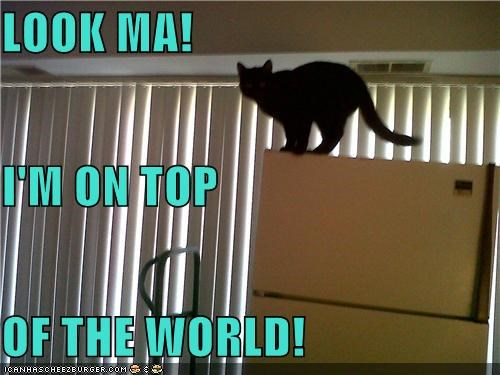 LOOK MA! I'M ON TOP OF THE WORLD!
