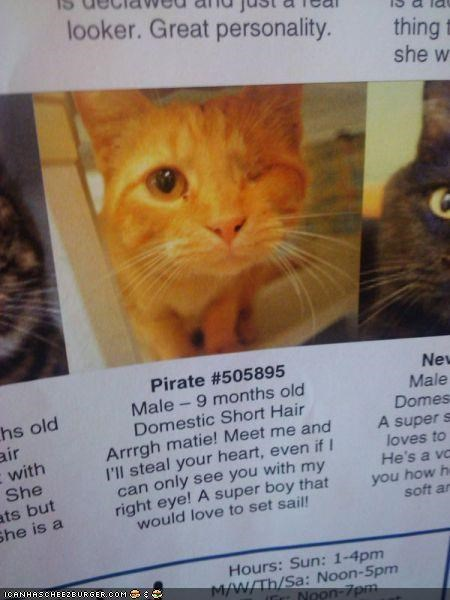 Arrgh-some Kitteh Adoption Advertisment