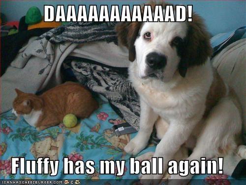 again,ball,cat,complaining,dad,puppy,saint bernard,stole,tabby