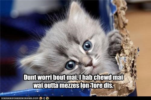 box,caption,captioned,cat,chewed,chewing,dont worry,kitten,master,mess,messes,pro