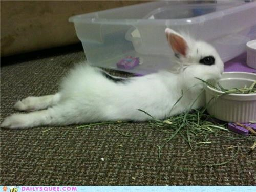 after,baby,bunny,making,mess,messy,rabbit,reader squees,tired