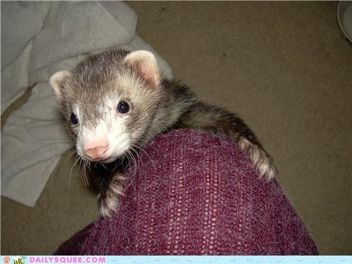 baby,climbing,exploring,ferret,leg,ramone,reader squees,spelunker,spelunking