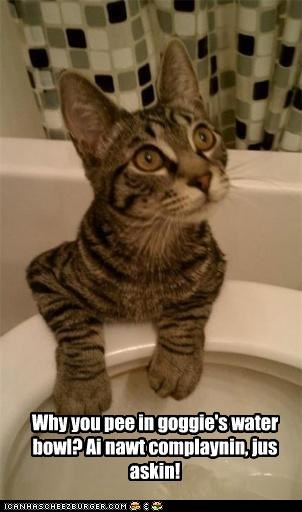 Why you pee in goggie's water bowl?