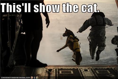 Cats,dogs,parachute,political pictures,Pundit Kitchen