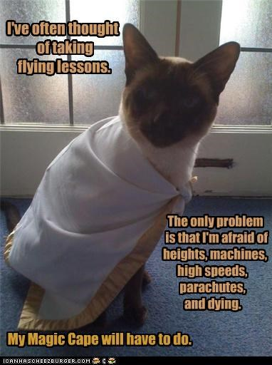afraid,cape,caption,captioned,cat,dying,flying,heights,high speed,lessons,machines,magic,parachutes,phobia,phobias,problem,siamese,thought