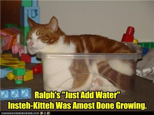 "Ralph's ""Just Add Water"" Insteh-Kitteh Was Almost Done Growing."