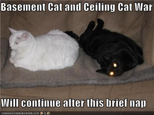 Basement Cat and Ceiling Cat War  Will continue after this brief nap
