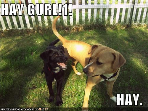 girl,Hey,hey girl,labrador,mixed breed,pickup line,pit bull,puppy