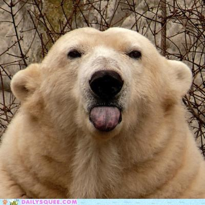 acting like animals,bear,camera,Command,disagreeable,disobedient,disobeying,insulting,photography,polar bear,posing,sassy,smile