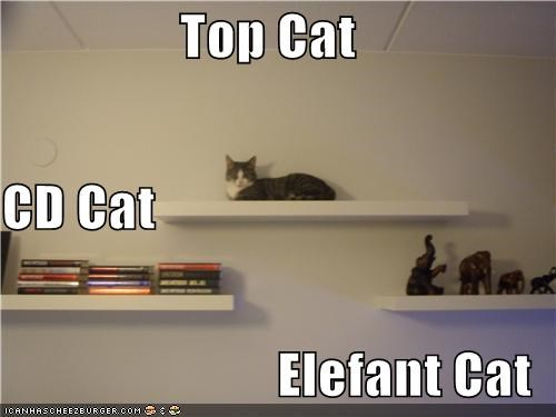 Top Cat CD Cat Elefant Cat