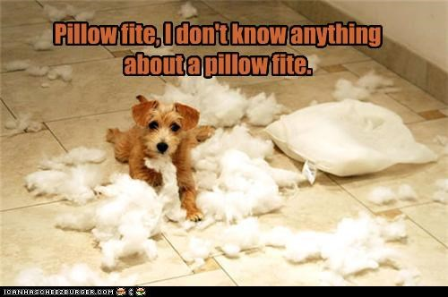 Pillow fite, I don't know anything about a pillow fite.