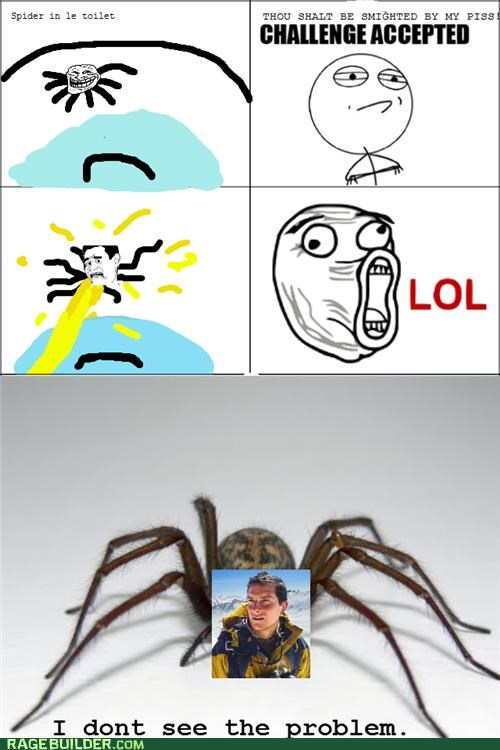 Spider in the Toilet