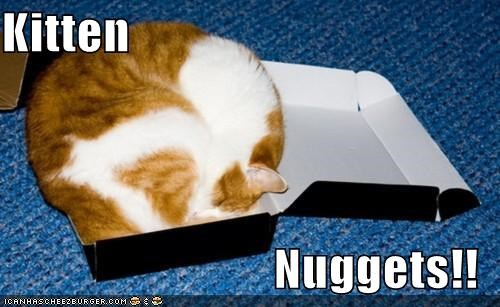 Kitten  Nuggets!!