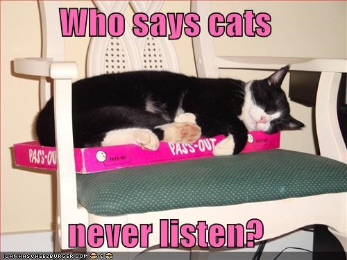 Who says cats  never listen?