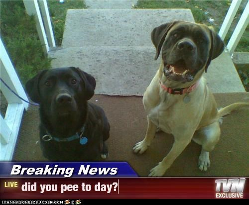 Breaking News - did you pee to day?