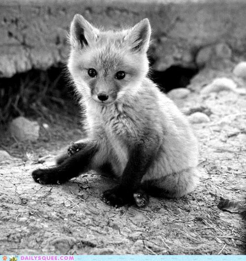 Baby Foxes, Always Kittin' Around